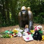Signifying Nothing And Everything: How Harambe The Gorilla Became The Perfect Meme