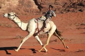 camael riding