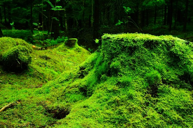 Mossy Tree Stump - 10 Easy Ways to Immerse Yourself in Nature - ashleecraft.com