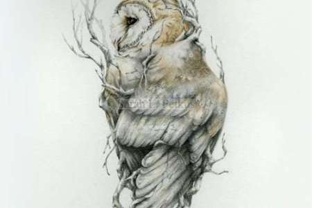 attractive owl tattoo design