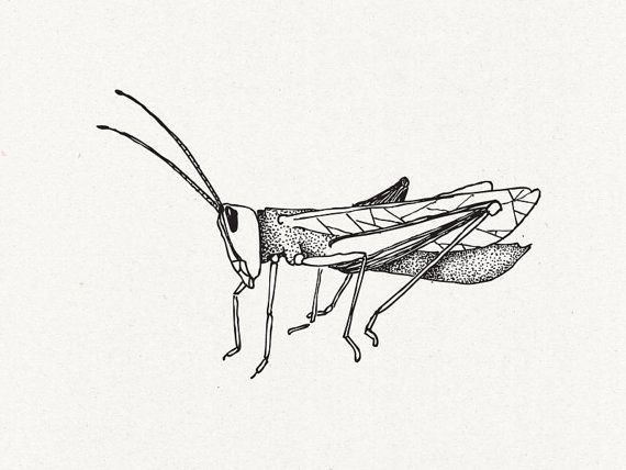 50+ Best Grasshopper Tattoos Design And Ideas of 23 by Bethany