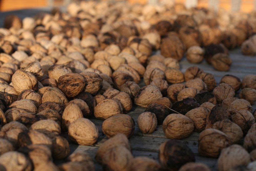 fresh picked walnu