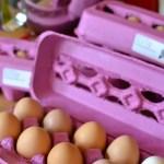 Fresh Eggs & Storage Tips