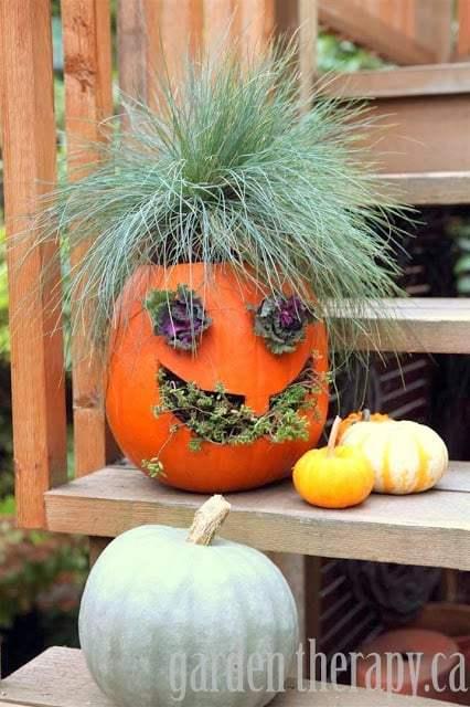 Jack-O-Planter | Garden Therpy