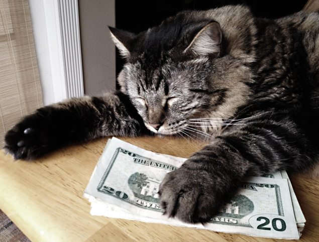 fat-cat-cash