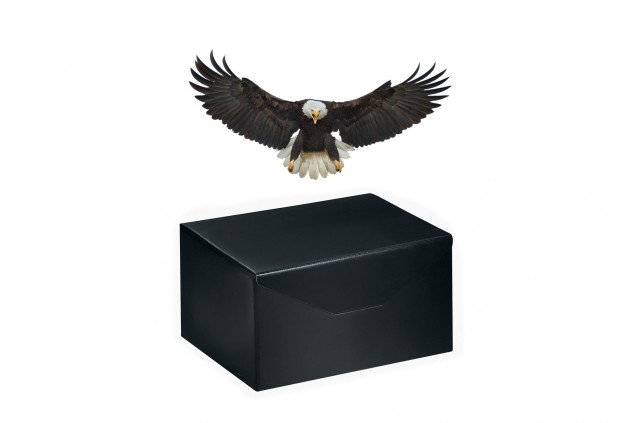 America-Black-Box-Bald-Eagle