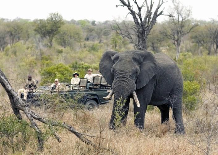 South Africa Luxury Safari - Elephant Kruger