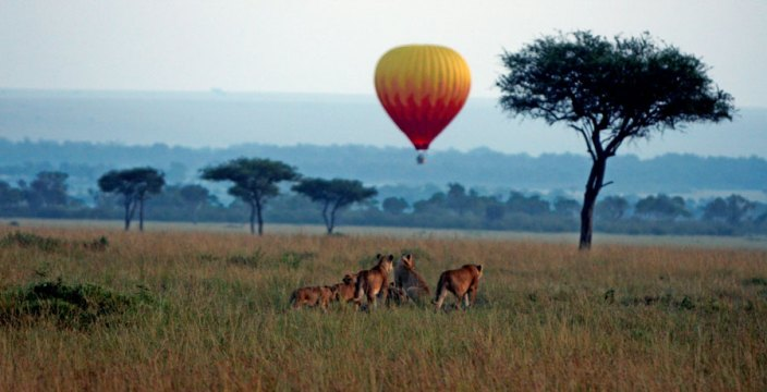 Lions looking at the Hot-Air Balloon