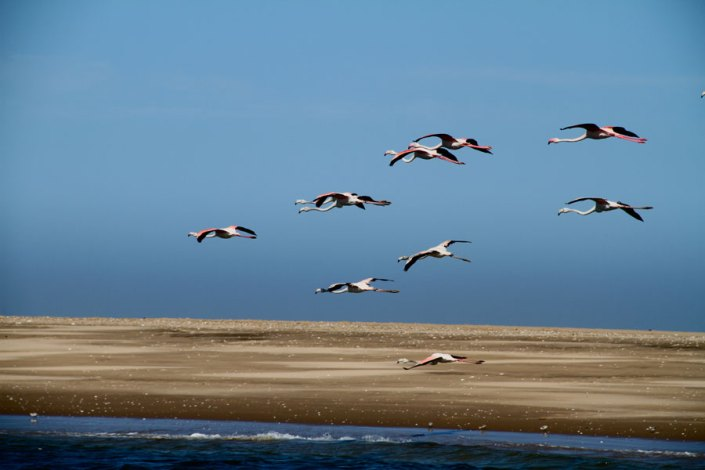 A boat tour on the Walvis bay, a must on your Namibia luxury safari