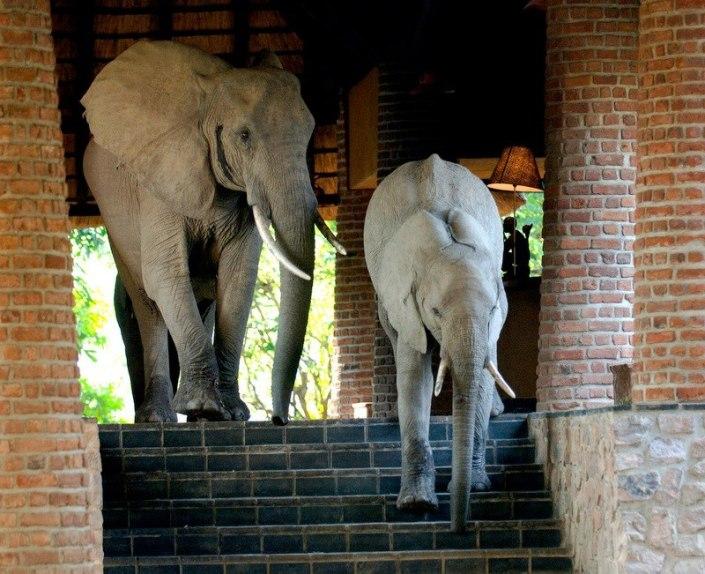 Elephants at Reception