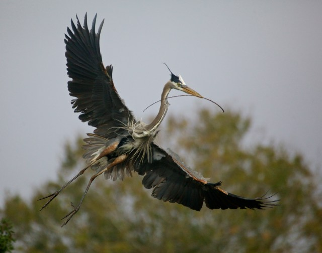 heron flight best