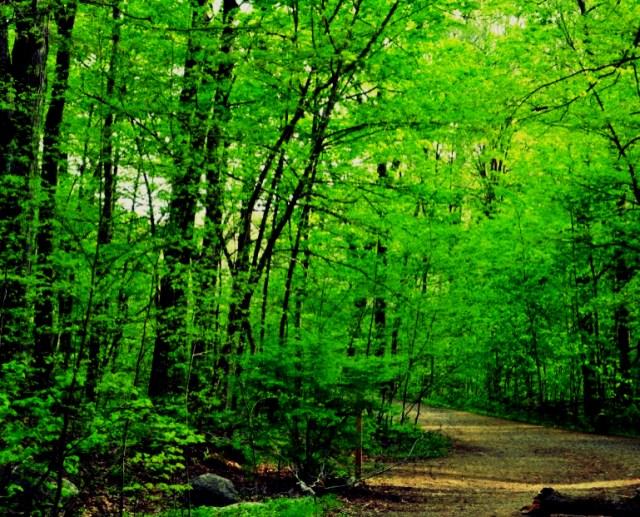 Middlesex-Fells-Trail_Fotor