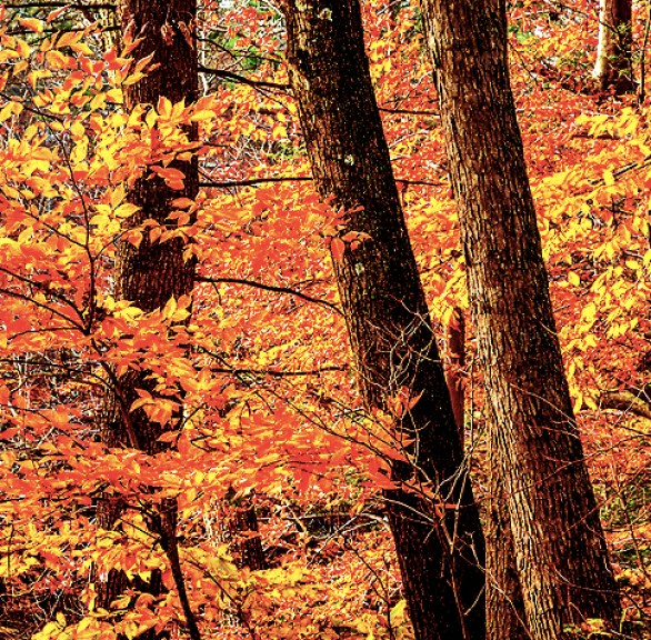 Fall foliage in the Middlesex Fells Reservation, Melrose, MA, USA