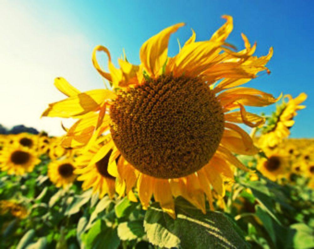 flower_fotor