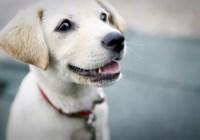 casting dog show