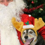 Casting Actors Who Love Dogs To Play Santa in Multiple Cities and States
