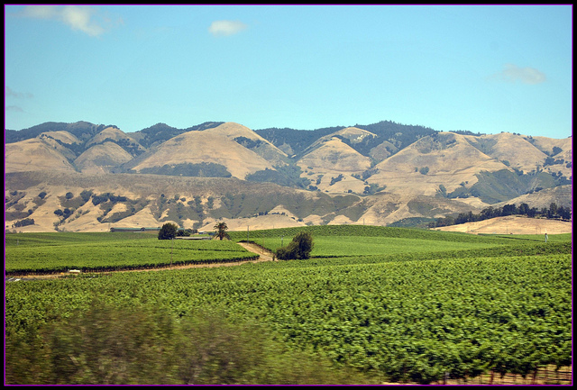 slo wine country
