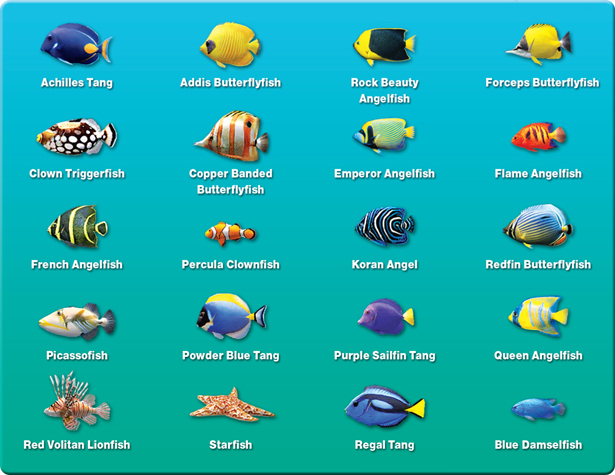 Saltwater fish names hawaiian reef fish guide types of for Tropical fish list