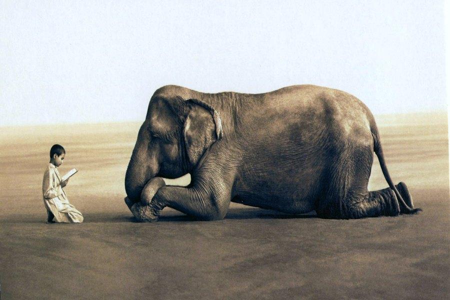 """Billet """"L'enfant et l'éléphant"""" paru sur www.avecpanache.ch"""