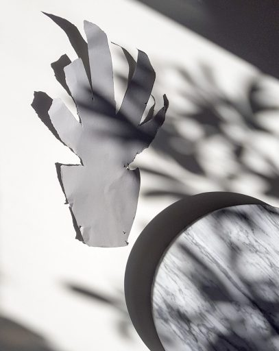 Plant shadow 7