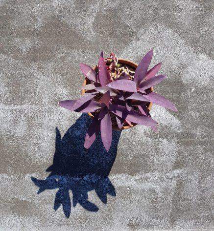 Shadow-plant-1-1108x1200