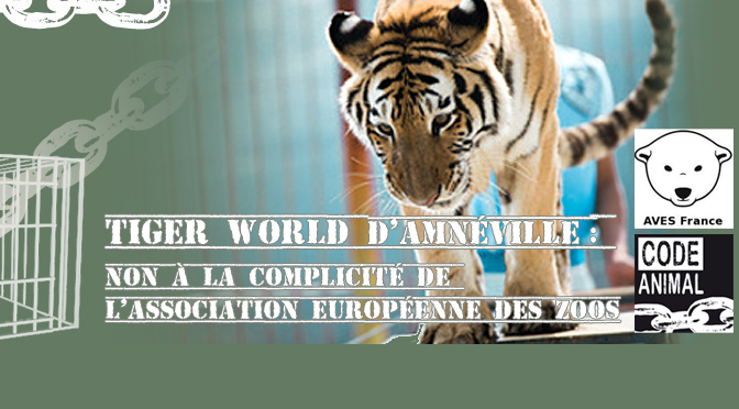 fb_tigerworld_bandeau-ws