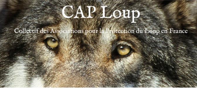 Politique anti-loups : Les associations vont porter plainte contre la France