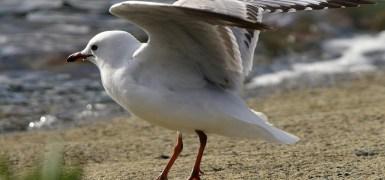 Pássaro decolando