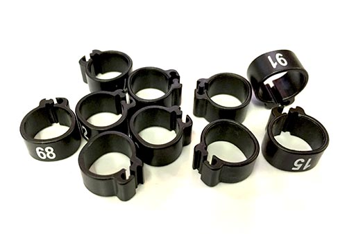 black bird rings