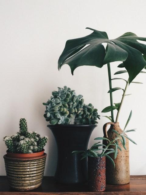 cactus, echeveria, monstera