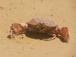 A crab we found