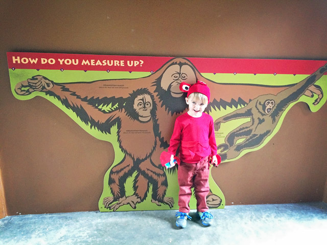 Oregon Zoo at Halloween // A Well Crafted Party