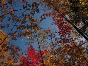 The Awesome Mitten-Peak Colors in Marquette and Where to See Them