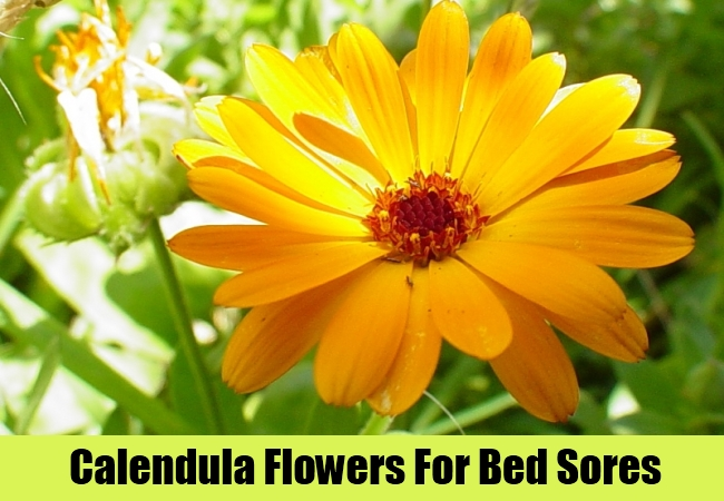 Calendula Flowers For Bed Sores