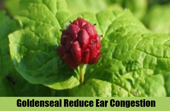 Goldenseal Reduce Ear Congestion