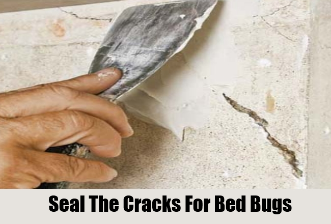 fastest way to get rid of bed bugs | furniture oh furniture