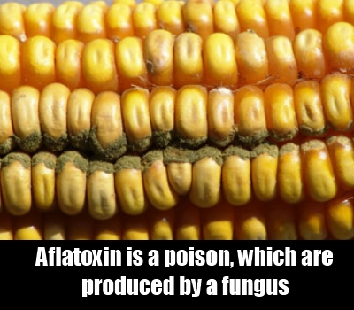 Avoid Foods That May Be Contaminated With Aflatoxin