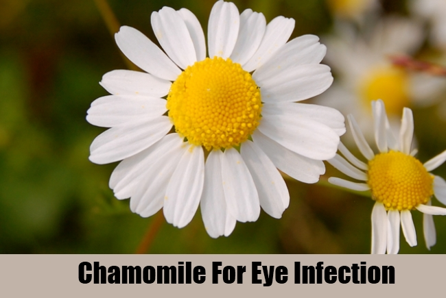 Chamomile For Eye Infection