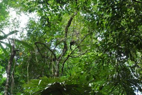 Can you see the monkey?