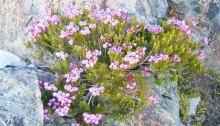 mountain_shrub_featured