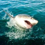 shark cage diving south africa 6 of 6 150x150 From Snow To Sahara   Im Travelling In Morocco!