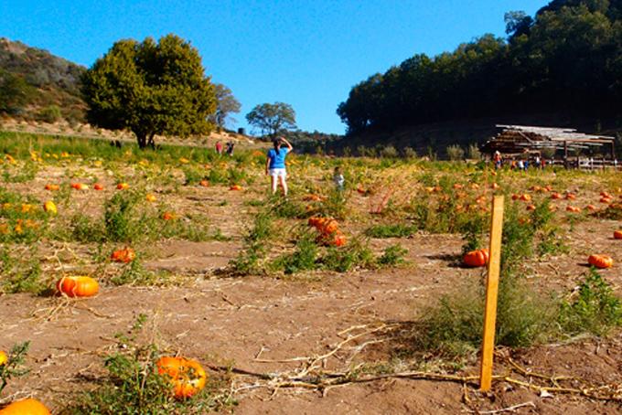 pumpkin-picking-oak-glen-backyardbite9