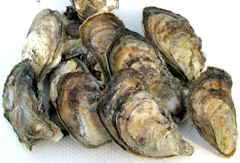 chesapeake_oysters