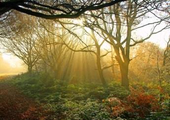 Morning on Danbury Common