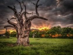Mundon Oak Sunset, Simon Darney, 2015
