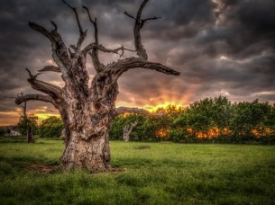 Mundon Oak Sunset, Simon Darney, 2015