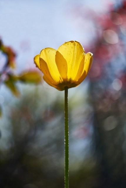 One Little Flower, Peter Rockliffe