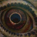 Voyage of Time: prime spettacolari immagini dal documentario di Terrence Malick