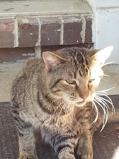 Special Needs Cat Snickers Rescued by HART