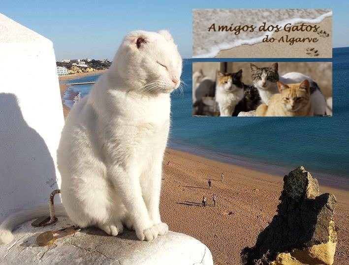 Special Needs Cat Mr. No Ears is Cared for by Amigos dos Gatos do Algorve
